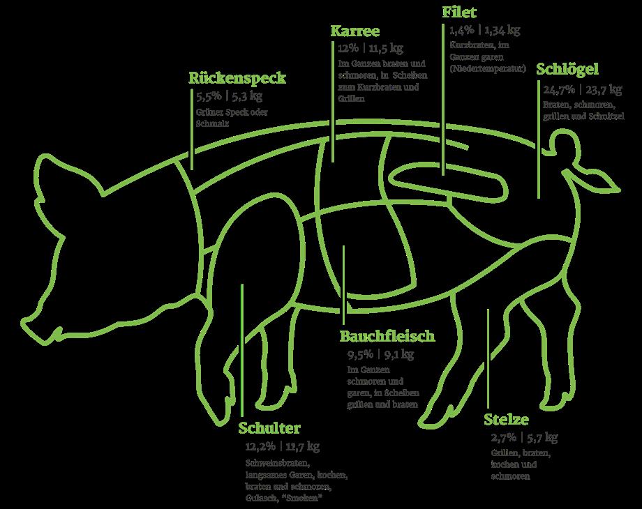 Schwein Grafik Bio 2